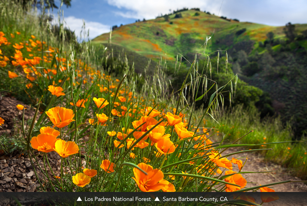 Los Padres National Forest, Santa Barbara County, CA