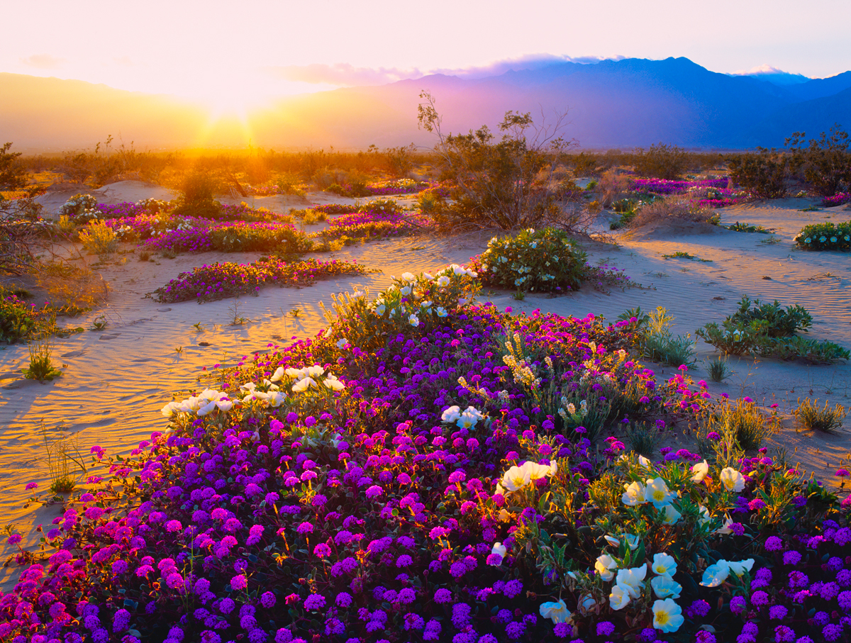 Best Desert Vacations
